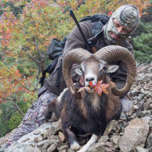 Mouflon25