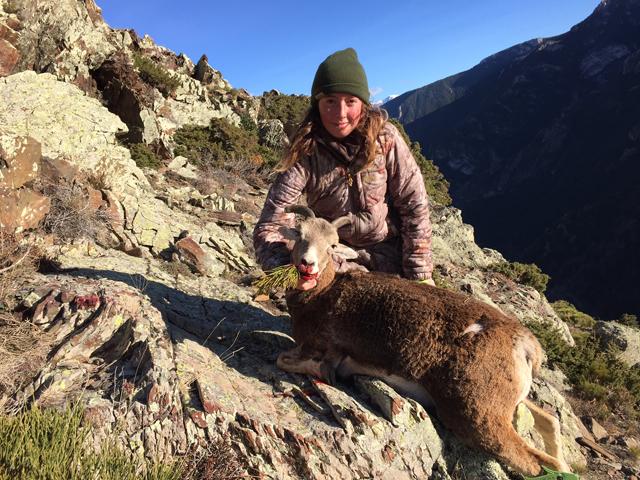 chasse du mouflon