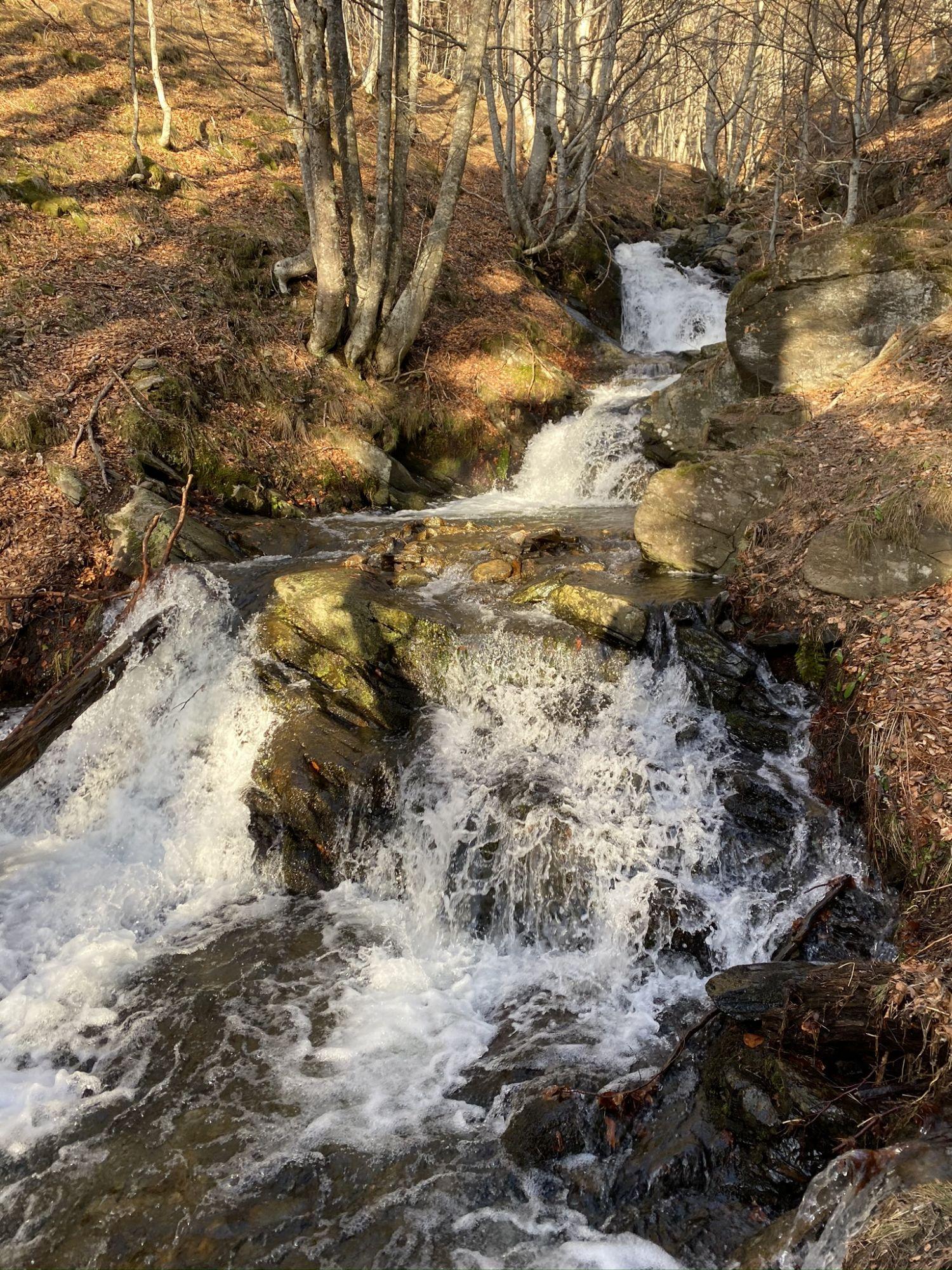 Chasse Pyrénées Orientale