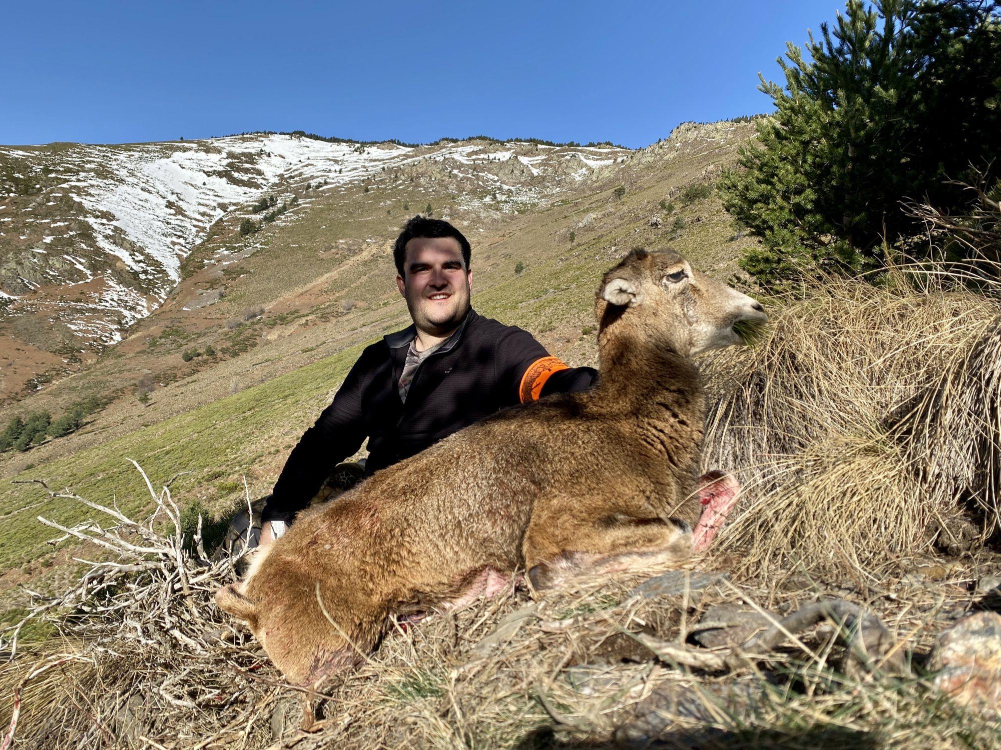Mouflon Pyrénées