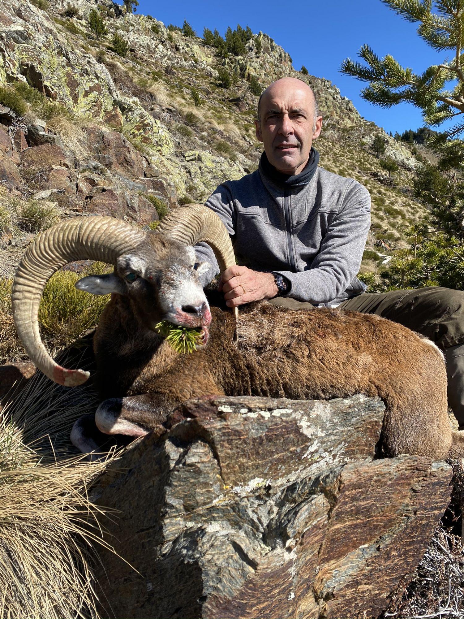 Chasse du Mouflon Pyrénées